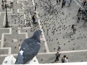 birds-eye-view